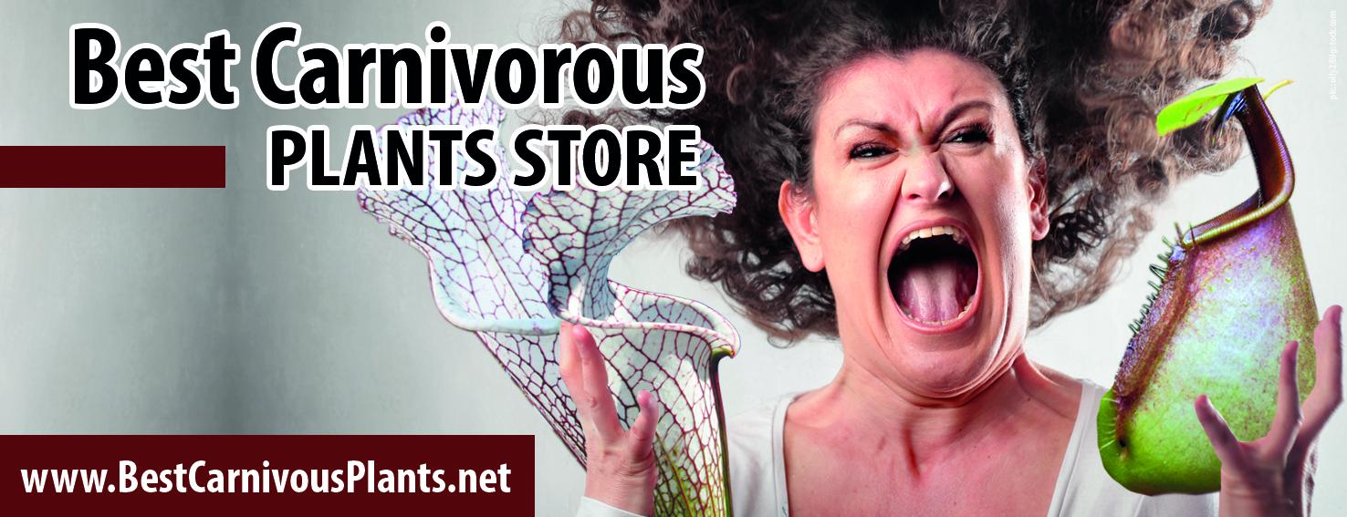 Best Carnivorous Plant Store