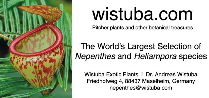 Wistuba.com